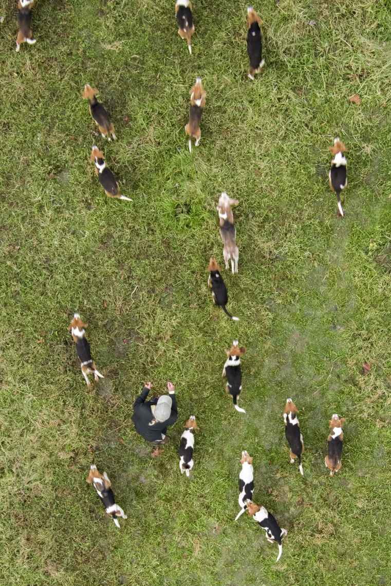 Aerial view of a beagle hunt in rural Virginia