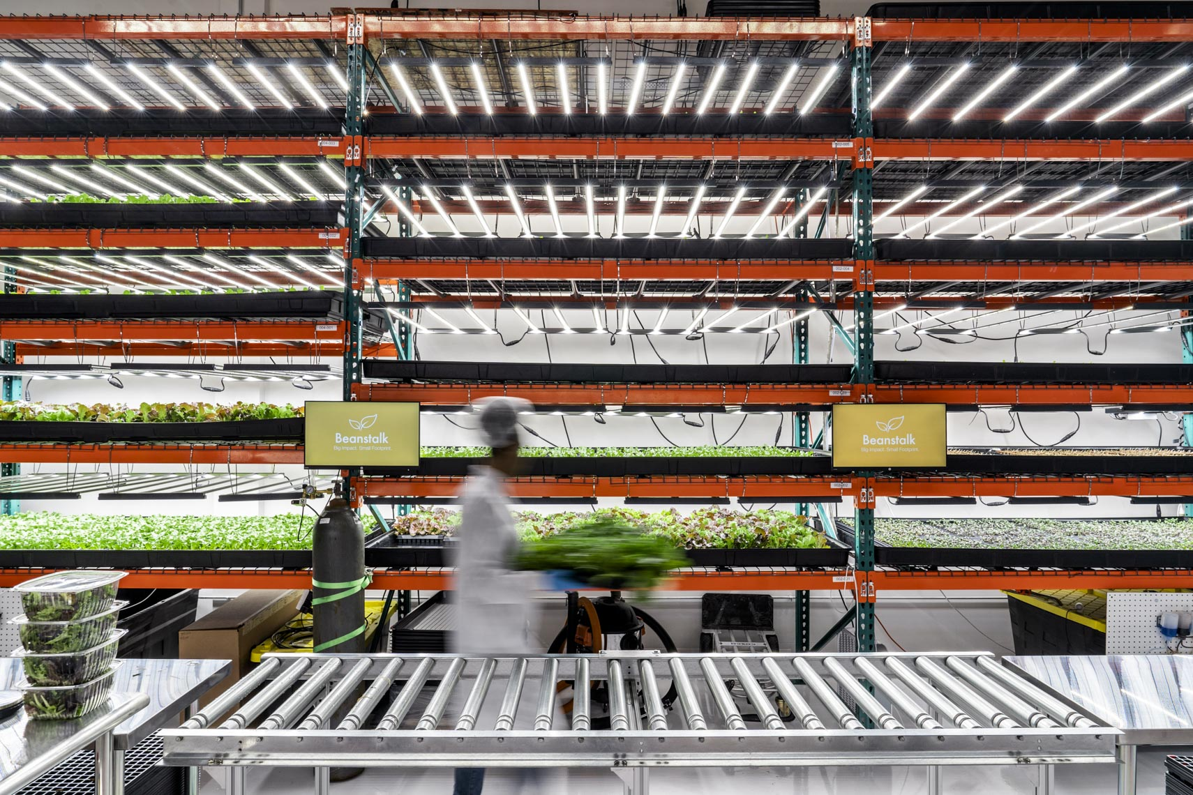 Rows of lettuce seedlings at Beanstalk Farms, an automated indoor farming operation in suburban Washington DC.