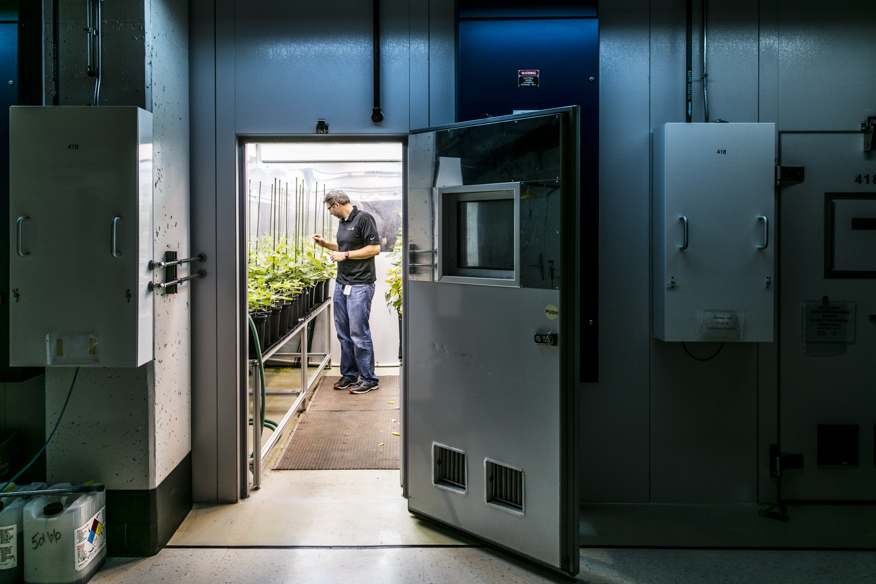 A lab technician checks on genetically modified plants at Monsanto