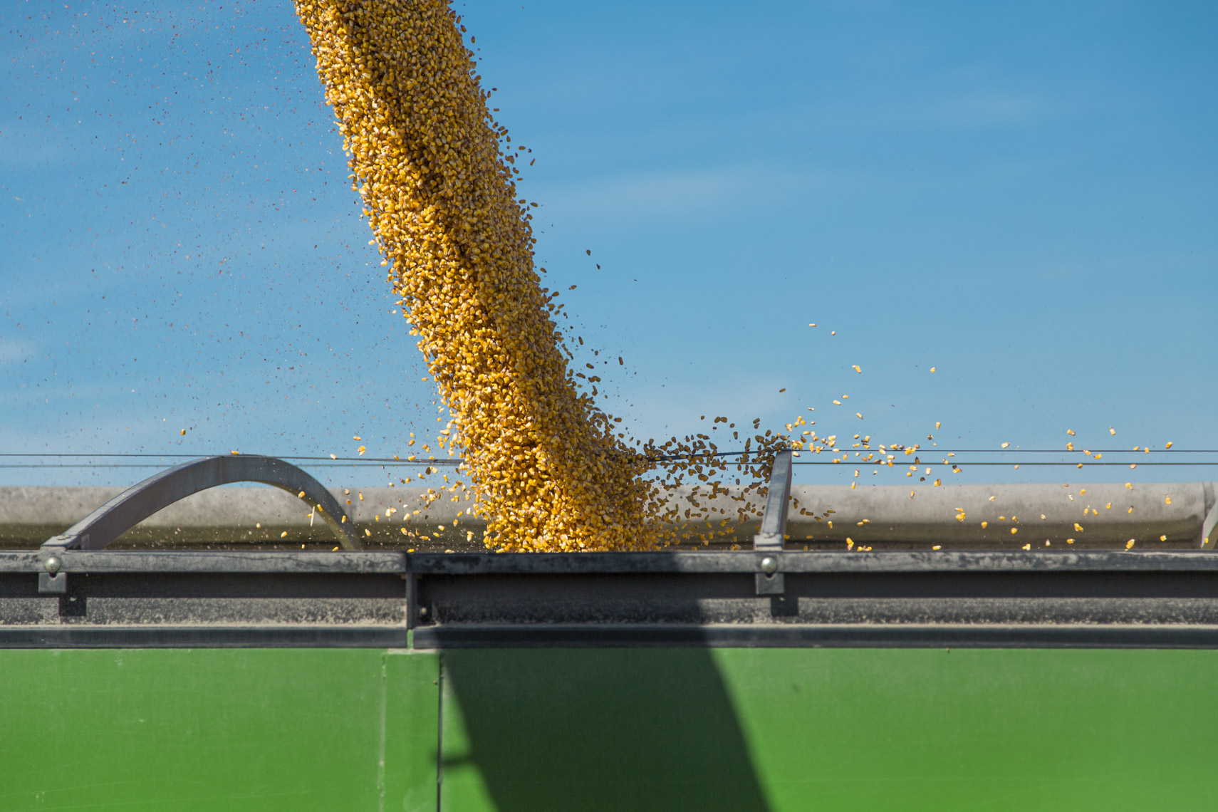 Farmers harvest corn during the fall in Iowa.